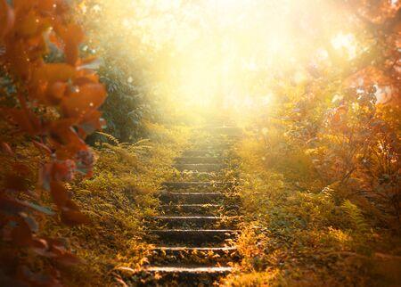 Herfst achtergrond, trap naar de hemel. verbazingwekkende mysterieuze wegstappen leiden naar een mystieke wereld, sprookjespad verbergt zich tussen gele en sinaasappelbomen, magisch oktober in mistig bos, schoonheid van de natuur