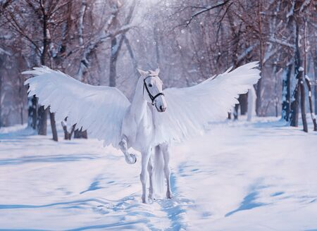Fantasy divine sunlight fabulous mythical Pegasus. White beautiful creative birds wings. animal stands on backdrop winter snowy forest. Fairy tale christmas. Photography wallpaper. Art costume horse Standard-Bild