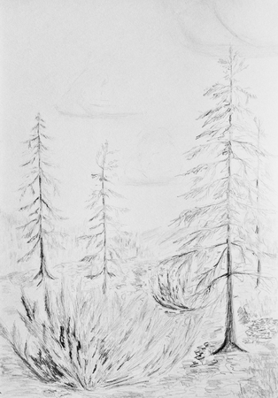 Larch trees grow on a rocky slope. Taiga landscape