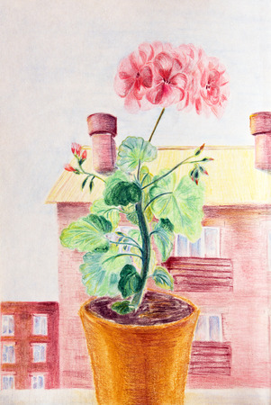 Blooming geranium at the window against the bright Sunny sky. Drawing with colored pencils