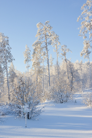 A beautiful winter landscape. Trees covered with frost