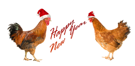 Rooster and hen isolated on a white background. Rooster and hen on New year postcard.