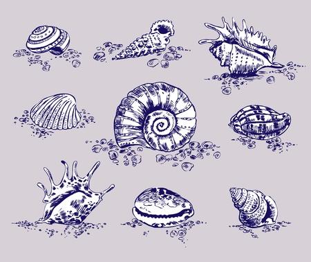 estrella de la vida: Un conjunto de doce conchas. Ilustraci�n vectorial