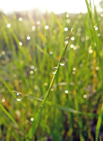 Dew drops on grass, close-up photo