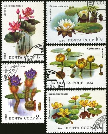 candida: Aquatic plant, postage stamp USSR