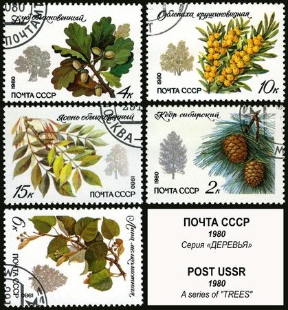 herbarium: Trees, postage stamp USSR