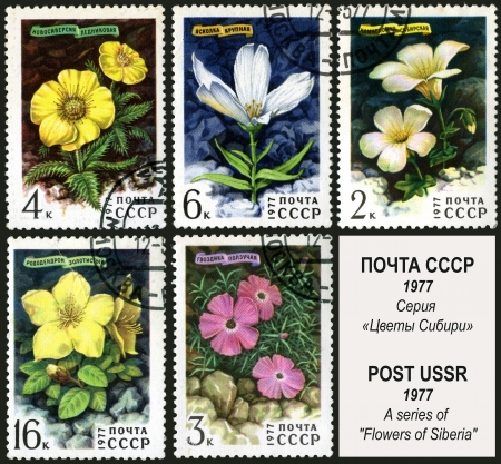 Sibirian flower, postage stamp USSR photo