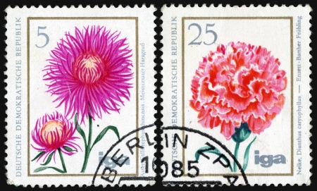 phytology: Carnation and aster, postage stamp Stock Photo