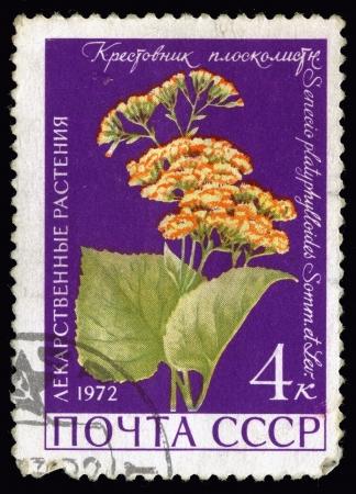 senecio: Medicinal Plants  Postage stamp USSR