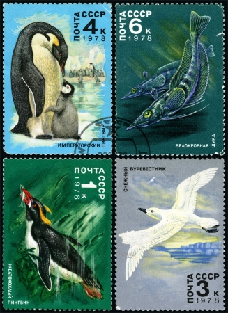 Antarctic Fauna, postage stamp USSR Stock Photo - 13734116