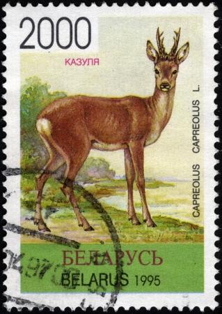 roe: Roe  Postage stamp Belarus