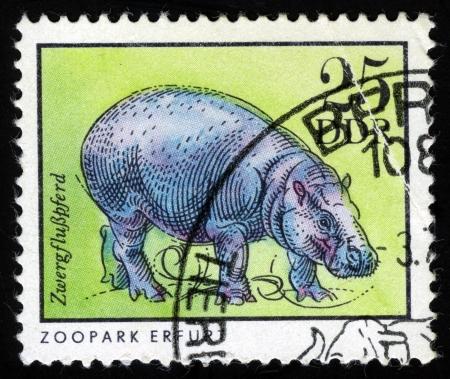 pygmy: Pygmy hippopotamus, from series Erfurt Zoo