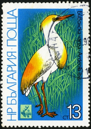 Cattle Egret - Ardeola ibis  Postage stamp Bulgaria Stock Photo - 13733808