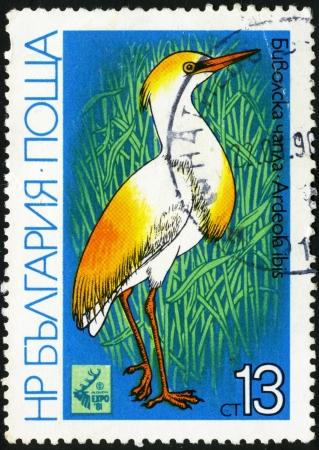 Cattle Egret - Ardeola ibis  Postage stamp Bulgaria Stock Photo - 13733808