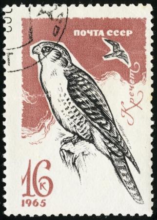 merlin: Merlin, falcon, hawk, postage stamp USSR