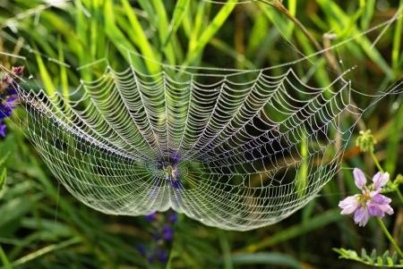 gotas de agua: Web de la araña y el rocío Tela de araña con gotas de agua Foto de archivo
