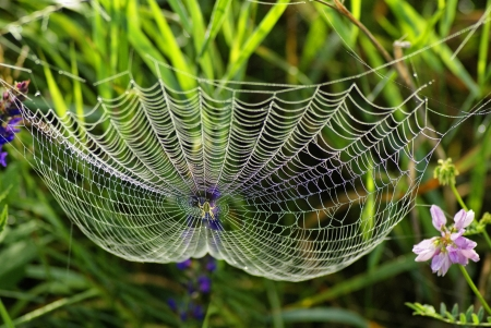 Web van de spin en dauw Spinnenweb met water druppels Stockfoto