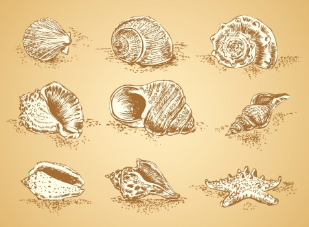 sea line: Collection graphic images seashell, vector set Illustration