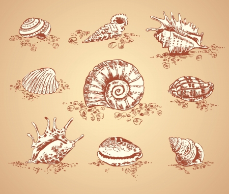 Collection graphic images seashell, vector set Vector