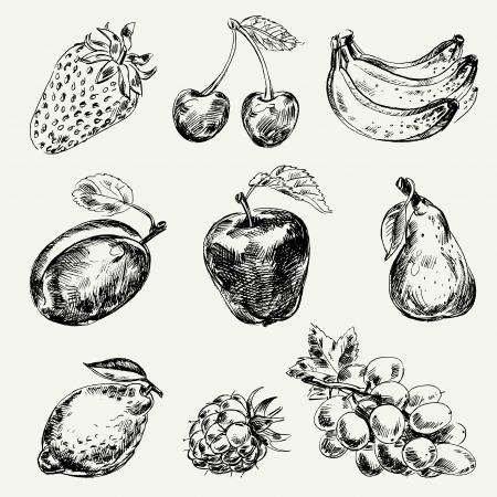 apple leaf: Set of fruits, Freehand drawing, Vector illustration