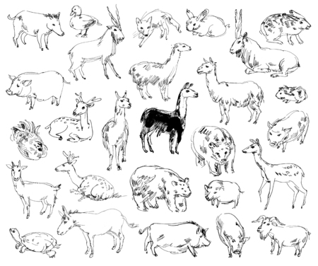 wild donkey: Wild Animals. Zoo. Set. Hand-drawn