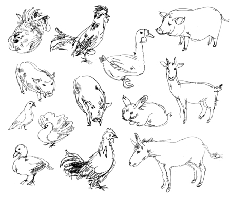 Farm animals. Set. Hand-drawn photo
