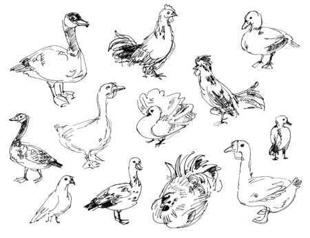 guinea fowl: Poultry farm. Set. Hand-drawn