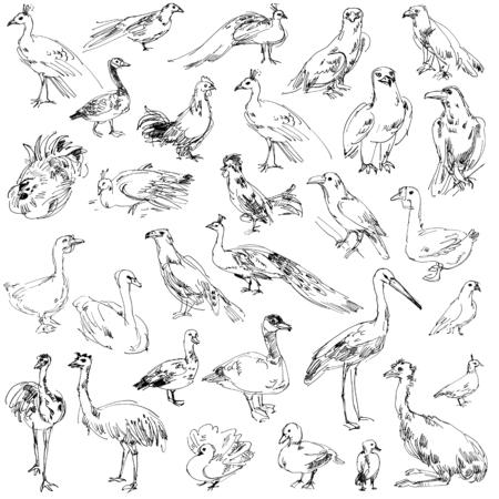 mute swan: Wild birds. Zoo. Set. Hand-drawn