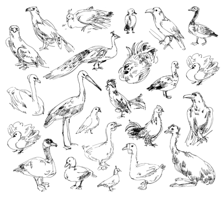 buzzard: Wild birds. Zoo. Set. Hand-drawn Stock Photo
