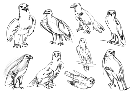 legged: Golden eagle. Buzzard. Legged Buzzard. Kestrel. Hawk. Set. Hand-drawn