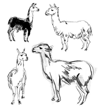 llama: Lama. Set. Hand-drawn Stock Photo