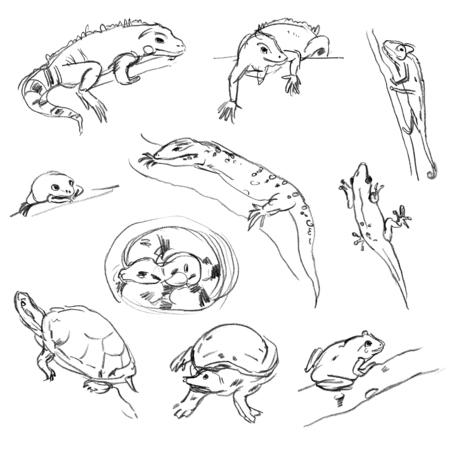 newt: Reptiles. Set. Chameleon, tree-frog, iguana, python, boa, turtle. Hand-drawn  Stock Photo