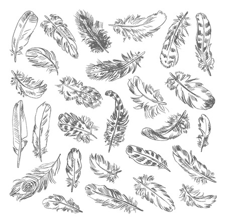 freehand drawing: Freehand drawing quill. Vector illustration. Isolated on white background Illustration