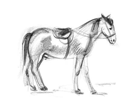 hoofed mammal: Horse. Hand-drawing in pencil Stock Photo