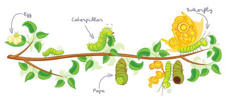 mariposa caricatura: La metamorfosis de la mariposa