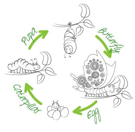 cartoon larva: The metamorphosis of the butterfly  Illustration