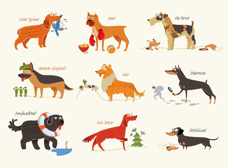 Dog breeds illustration Isolated on white background.  Vector
