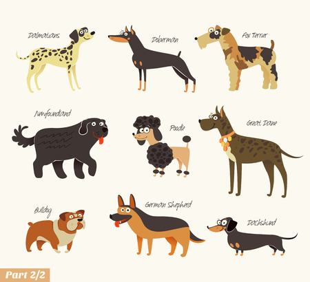 dog: Dog breeds illustration.