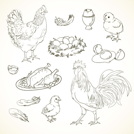 exercise book: Freehand drawing chicken items on a sheet of exercise book. Vector illustration. Set. Black and white
