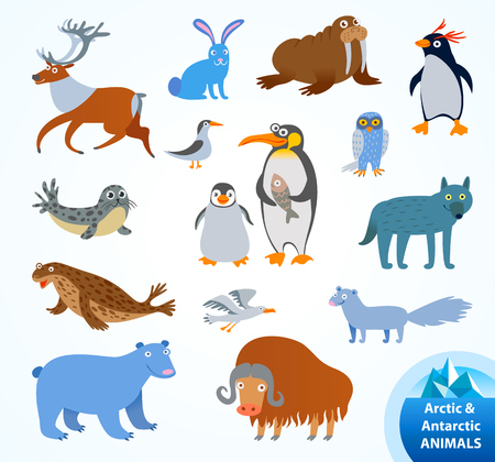 Set funny Arctic and Antarctic animals. Penguin, polar bear, seal, walrus, arctic fox, musk-ox, hare, reindeer, wolf, snowy owl, albatross, arctic tern. Funny cartoon character. Vector illustration