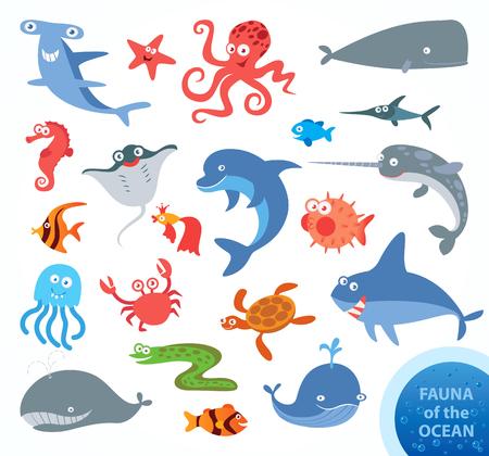 Establezca la fauna graciosas de océano. Narwhal, tiburón martillo, el tiburón blanco, ballena, delfín, pez espada, tortugas, medusas, pulpos, caballitos de mar, cangrejos, estrellas de mar. Personaje de dibujos animados divertido. Ilustración vectorial
