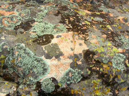 inclement: Granite mossy, texture, close-up. Background. A mossy ground in the garden. Stock Photo