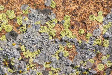Granite mossy, texture, close-up. Background. A mossy ground in the garden. Stock Photo