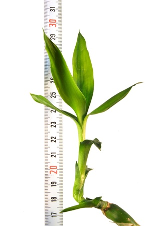 correlation: Plant with a ruler on a white background