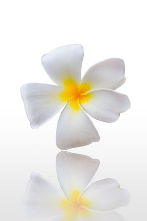 isolated plumeria on white background Stock Photo - 8045890