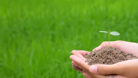 Hands holding small young plant, young tree on green rice background, world earth day concept, plant on soil in hand. Stock Photo