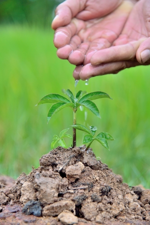 Plants agriculture. Growing plants. Plants seedling. Hands nurturing and watering young baby plants growing in germination on fertile soil with natural green background.