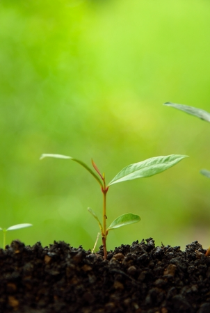 concept agriculture planting seeding growing step in soil on green nature background. love earth concept.