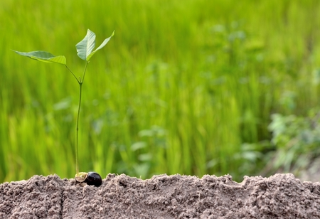 young plants growing step on green background concept