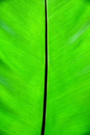 green leaf is fresh on pattern lines Stock Photo